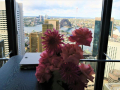 sydney-city-wedding-venues
